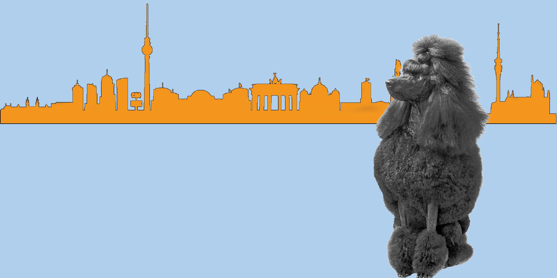 Webdesign Rhein-Sieg Bonn Koeln Pudel vor Koelner Panorama