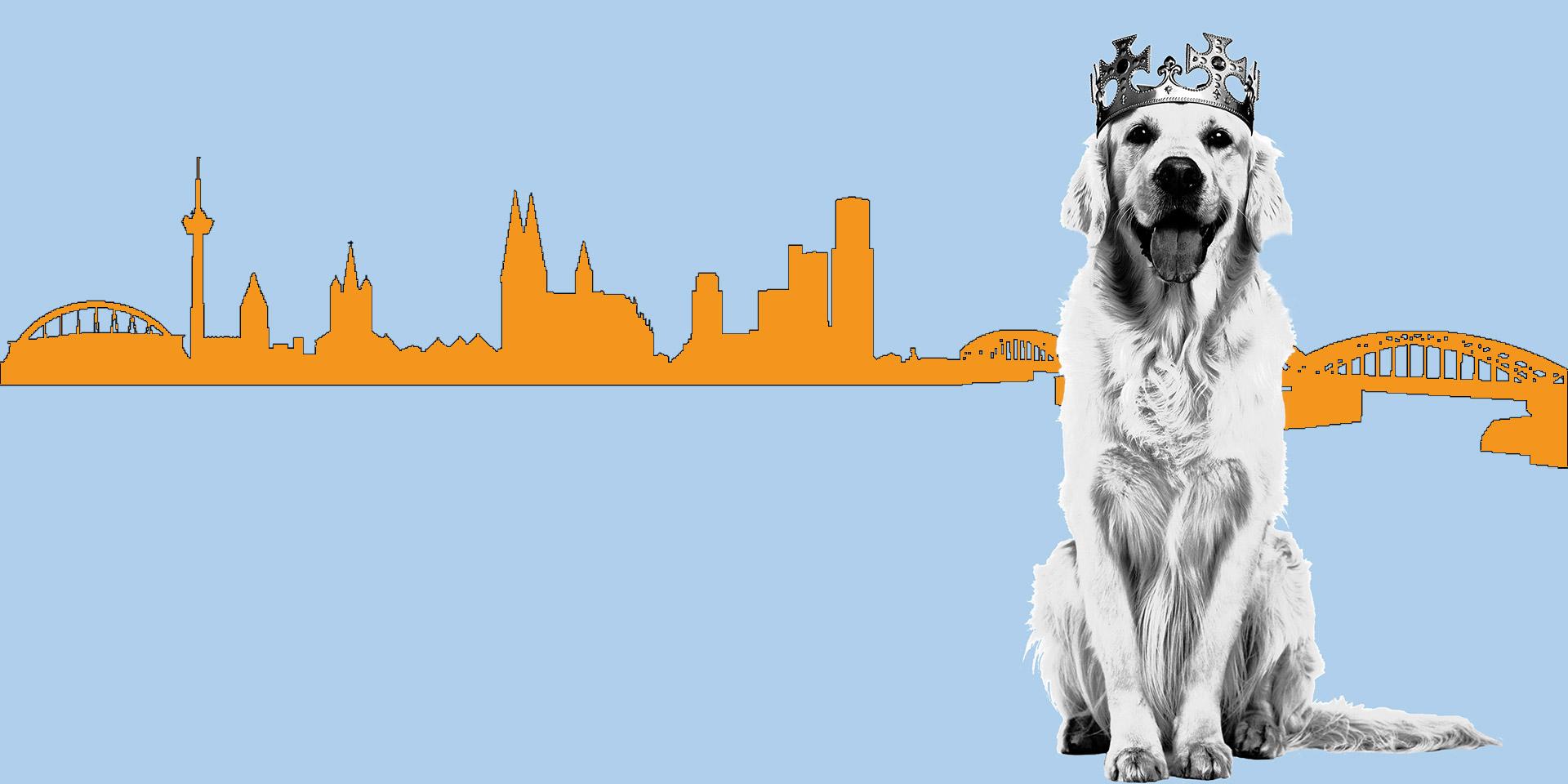 Webdesign Rhein-Sieg Bonn Koeln Labrador vor Koelner Panorama