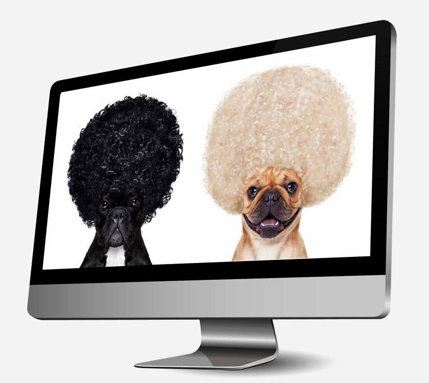 responsives Webdesign zwei Hunde auf einem PC Bildschirm